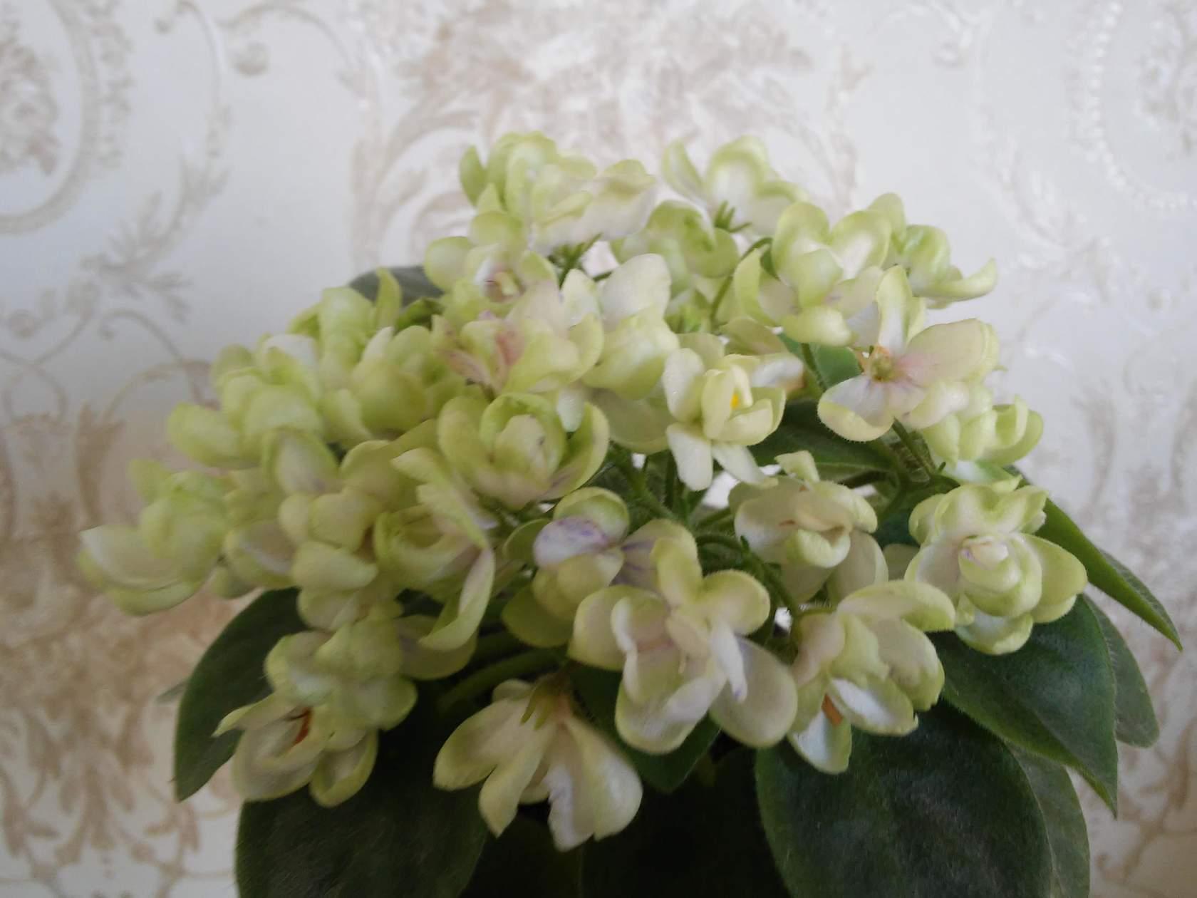 Чёрный цветок трейлер
