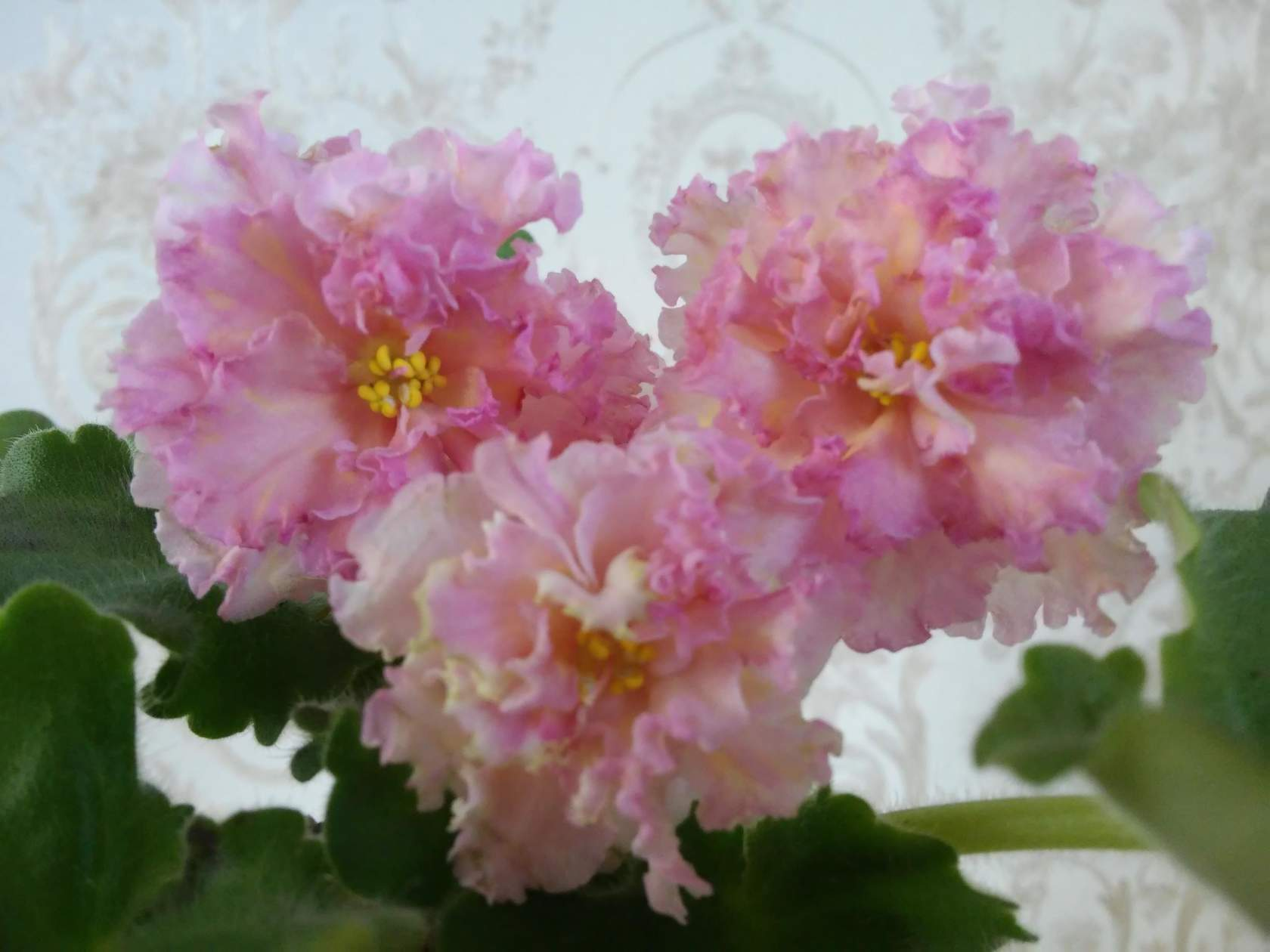 Заказать цветы гродно